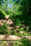 het zonnige de zomer voetpad van de wandelingssleep in het hout voor toeristen royalty-vrije stock fotografie