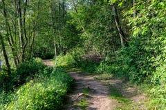het zonnige de zomer voetpad van de wandelingssleep in het hout voor toeristen stock afbeeldingen