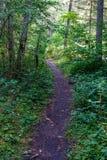 het zonnige de zomer voetpad van de wandelingssleep in het hout voor toeristen stock fotografie