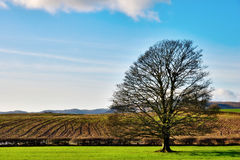 Het zonnige Landschap van de Winter Stock Afbeeldingen