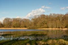 Het zonnige landschap van het de wintermoerasland met riet en naakte bomen die in het water nadenken stock afbeelding