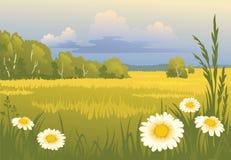Het zonnige landschap van de zomer Stock Fotografie