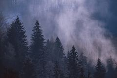 Het Zonnige mistige bos van de ochtendwinter stock afbeelding