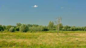 Het zonnige Vlaamse landschap van het de zomermoerasland in het estuarium van rivierschelde in Vlaanderen royalty-vrije stock foto