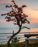 Het Zonsondergangogenblik bij SBS-het Eiland Indonesië van Toevluchtbatam stock afbeelding