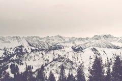 Het zonsopgangpanorama van sneeuw behandelde alpiene bergen royalty-vrije stock afbeelding
