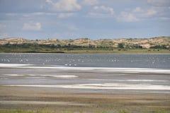 Het zoute meer in Gobi Stock Foto's