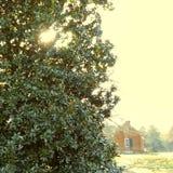 Het zuidelijke huis van de de aanplantingsboom van de charmemagnolia royalty-vrije stock foto's