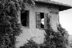 Het zwart-wit Altijdgroene klimop groeien op bakstenen muur van oud huis royalty-vrije stock fotografie