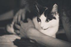 Het zwart-witte katje met groene ogen, verwarmt gestemd beeld Royalty-vrije Stock Afbeelding
