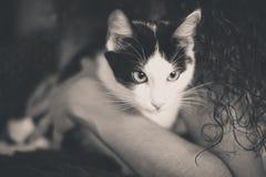 Het zwart-witte katje met groene ogen, verwarmt gestemd beeld Stock Afbeeldingen
