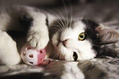 Het zwart-witte katje spelen Stock Fotografie