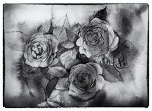 Het zwart-witte rozenwaterverf schilderen Stock Foto's