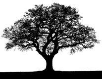 Het zwart-witte vectorsilhouet van de de herfstboom stock illustratie