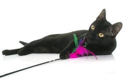 Het zwarte jonge kat spelen stock foto