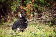 Het zwarte konijn van Nice royalty-vrije stock foto