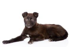 Het zwarte kruisingshond liggen Geïsoleerdj op witte achtergrond Royalty-vrije Stock Foto's