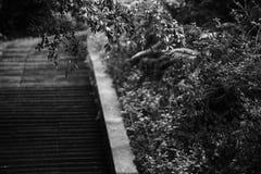 Het zwarte leafless silhouet van de boomfoto op witte achtergrond royalty-vrije stock foto