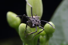 het zwarte mier voederen stock afbeeldingen
