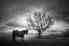 Het zwarte paard en de eik royalty-vrije stock foto's