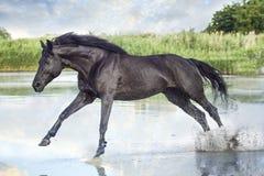 Het zwarte paard lopen royalty-vrije stock fotografie