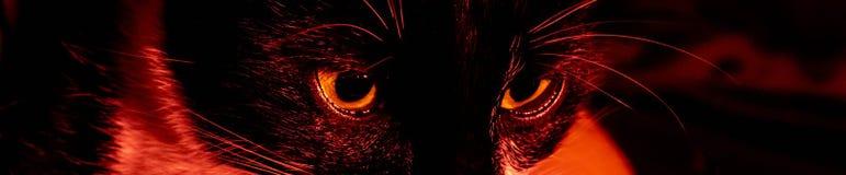 Het zwarte portret van het katten griezelige sinistere gezicht op zwarte achtergrond stock foto's
