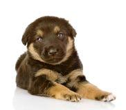 Het zwarte puppy ligt. het bekijken camera. royalty-vrije stock foto's