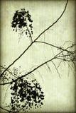 Het zwarte Silhouet van de Bloesem op Geribbeld Perkament stock illustratie