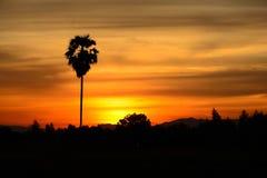 Het zwarte silhouet van de palm heeft een wolk en de zon is royalty-vrije stock fotografie
