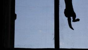 Het zwarte venster van de katjes blauwe hemel stock videobeelden