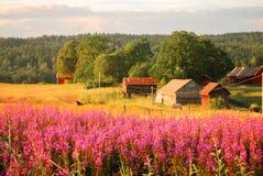 Het Zweedse landelijke platteland royalty-vrije stock foto's