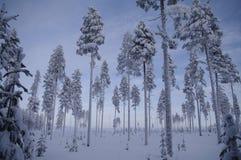 Het Zweedse sprookjesland van de Winter Royalty-vrije Stock Afbeeldingen
