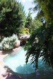 Het zwembad van de rots met struiken Stock Foto