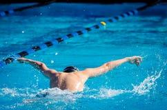 Het zwemmen Butterfy Stock Fotografie