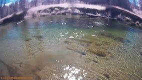 Het zwemmen in de Ketelrivier BC Canada stock footage