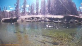 Het zwemmen in de Ketelrivier BC Canada stock videobeelden