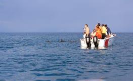 Het zwemmen met dolfijnen Stock Afbeeldingen