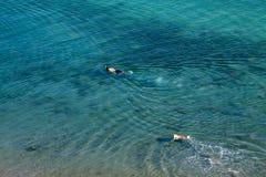 Het zwemmen met hond royalty-vrije stock foto's
