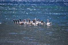 Het zwemmen op zonneschijn Royalty-vrije Stock Afbeelding