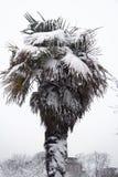 Hete boom, koud weer Royalty-vrije Stock Afbeeldingen
