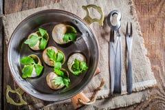Hete en verse slakken met peterselie en knoflookboter Stock Foto's