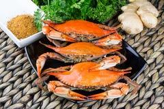 Hete gestoomde blauwe krabben met gember De Krabben van Maryland Gekookt en klaar te eten royalty-vrije stock foto