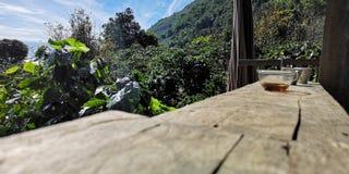 Hete koffie op een houten vloer met zonneschijn en bergen als achtergrond royalty-vrije stock fotografie