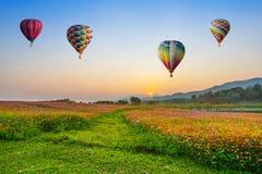 Hete luchtballon die over de gebieden van kosmosbloemen op zonsondergang vliegt stock fotografie