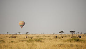 Hete luchtballon in Kenia Royalty-vrije Stock Foto's