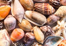Hete oranje overzeese shells achtergrond Kleine shells close-up Overzeese shell bannermalplaatje Stock Foto's