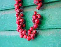 Hete peper achter elkaar, op een groene blokhuismuur Stock Fotografie
