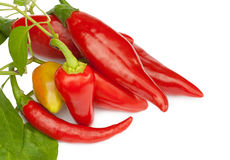 Hete rode Spaanse peper of Spaanse peperspeper Royalty-vrije Stock Fotografie