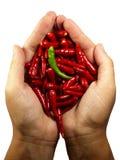 Hete Spaanse peper peper in de handen Stock Afbeelding