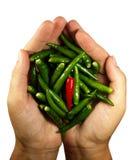 Hete Spaanse peper peper in de handen Royalty-vrije Stock Fotografie